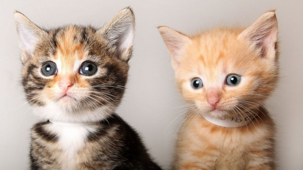 2 cute Merrick kittens close up