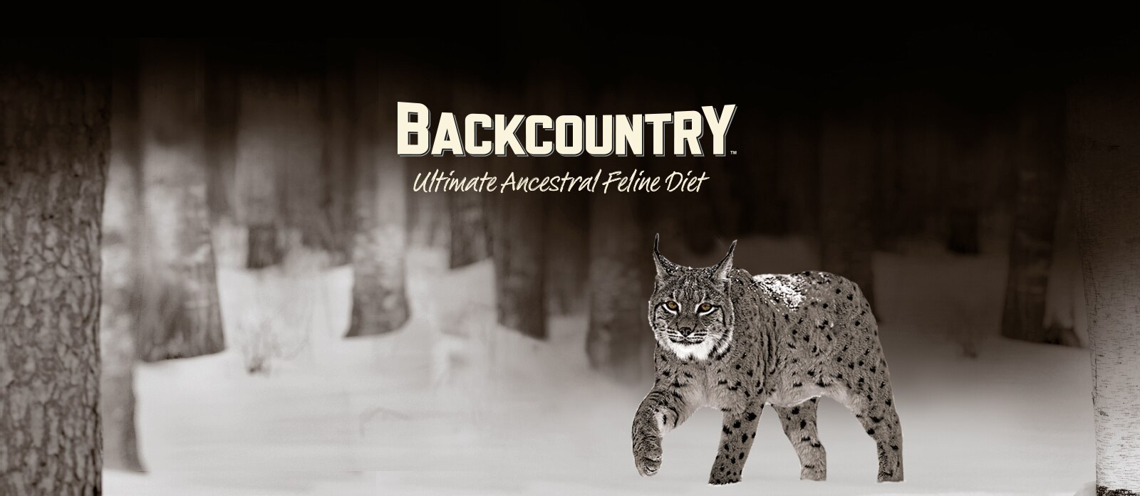 Backcountry Cat