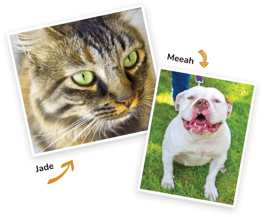 healthy bulldog and cat