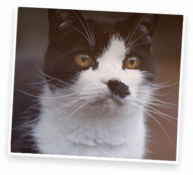 black and white spotted cat close up of face