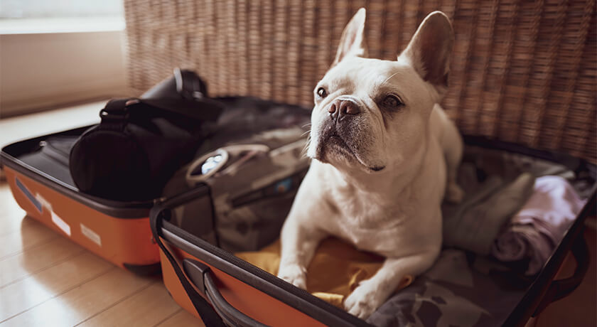 Food to Go and Other Tips for Traveling with Your Pet