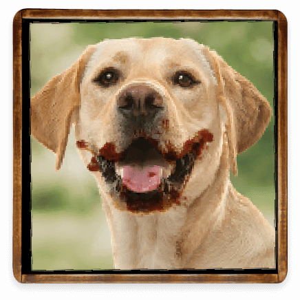 Smiling Dog with BBQ Sauce on His Snout