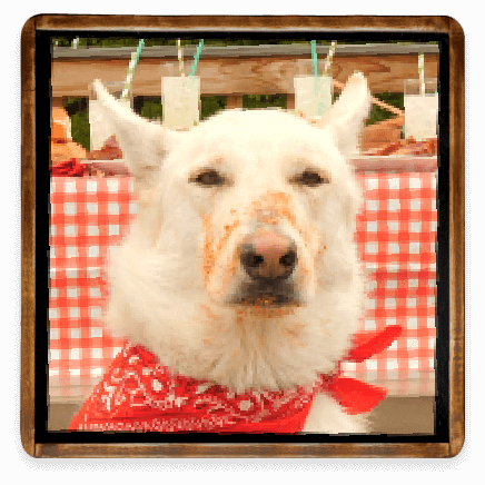 Dog Wearing a Bandanna with BBQ Sauce on His Nose