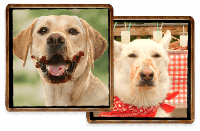 Dogs with BBQ Sauce on Their Snouts