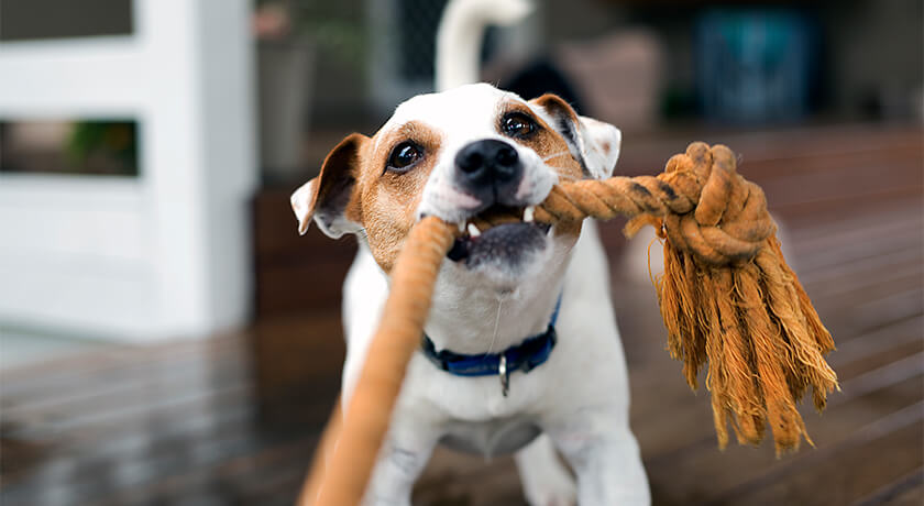 Tips for Caring for Your Pet's Oral Health