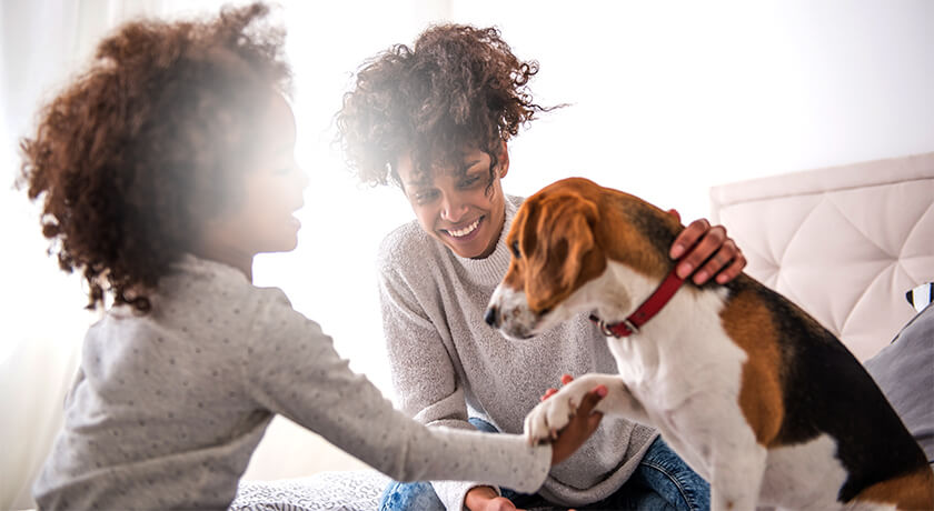 Helping Our Dogs And Cats Adjust Back To The Old Routine