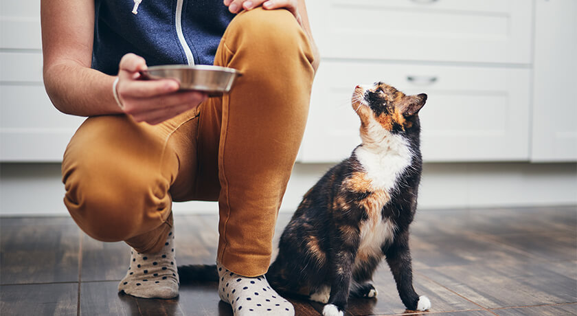 Opening Up The Everyday Benefits of Wet Food