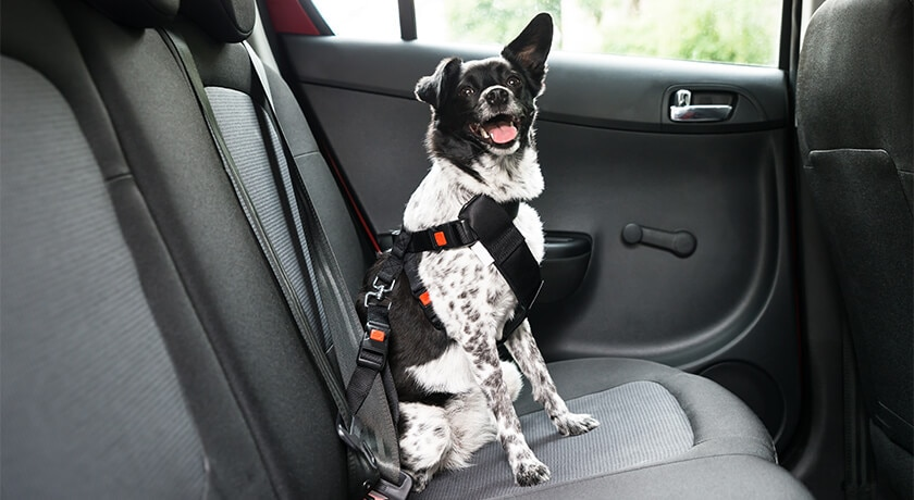 Pets On The Road