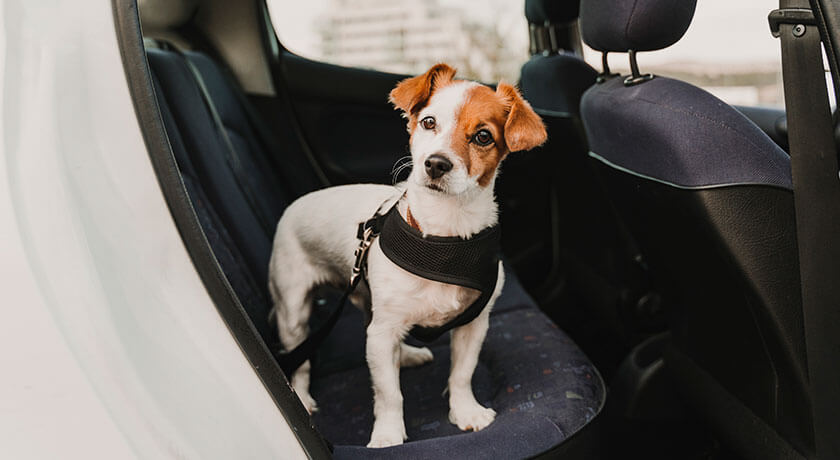 Recognizing National Pet Travel Safety Day