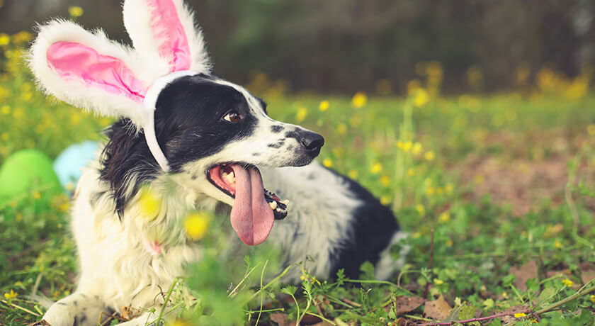 How To Have A Dog Easter Celebration