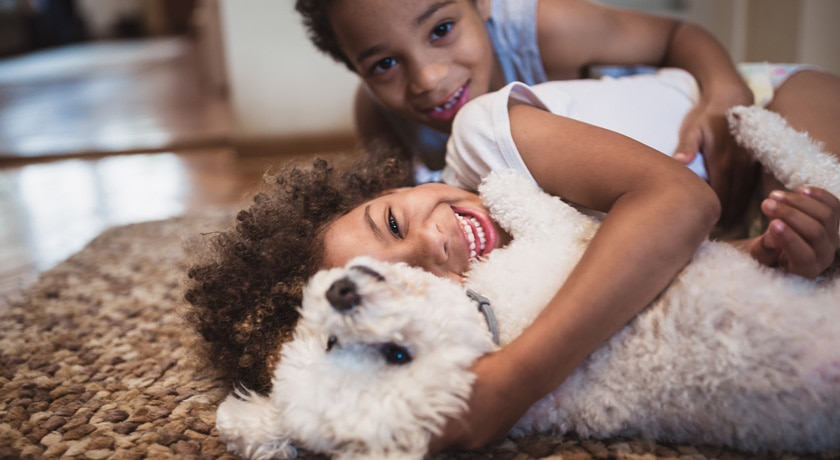 Six Indoor Games to Play with Your Dog