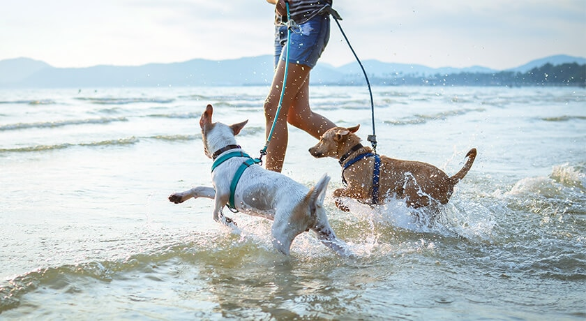 Fun Outdoor Activities With Your Dog